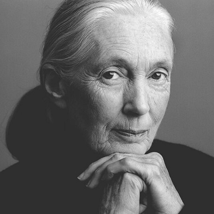 jane-goodall-sq_preview
