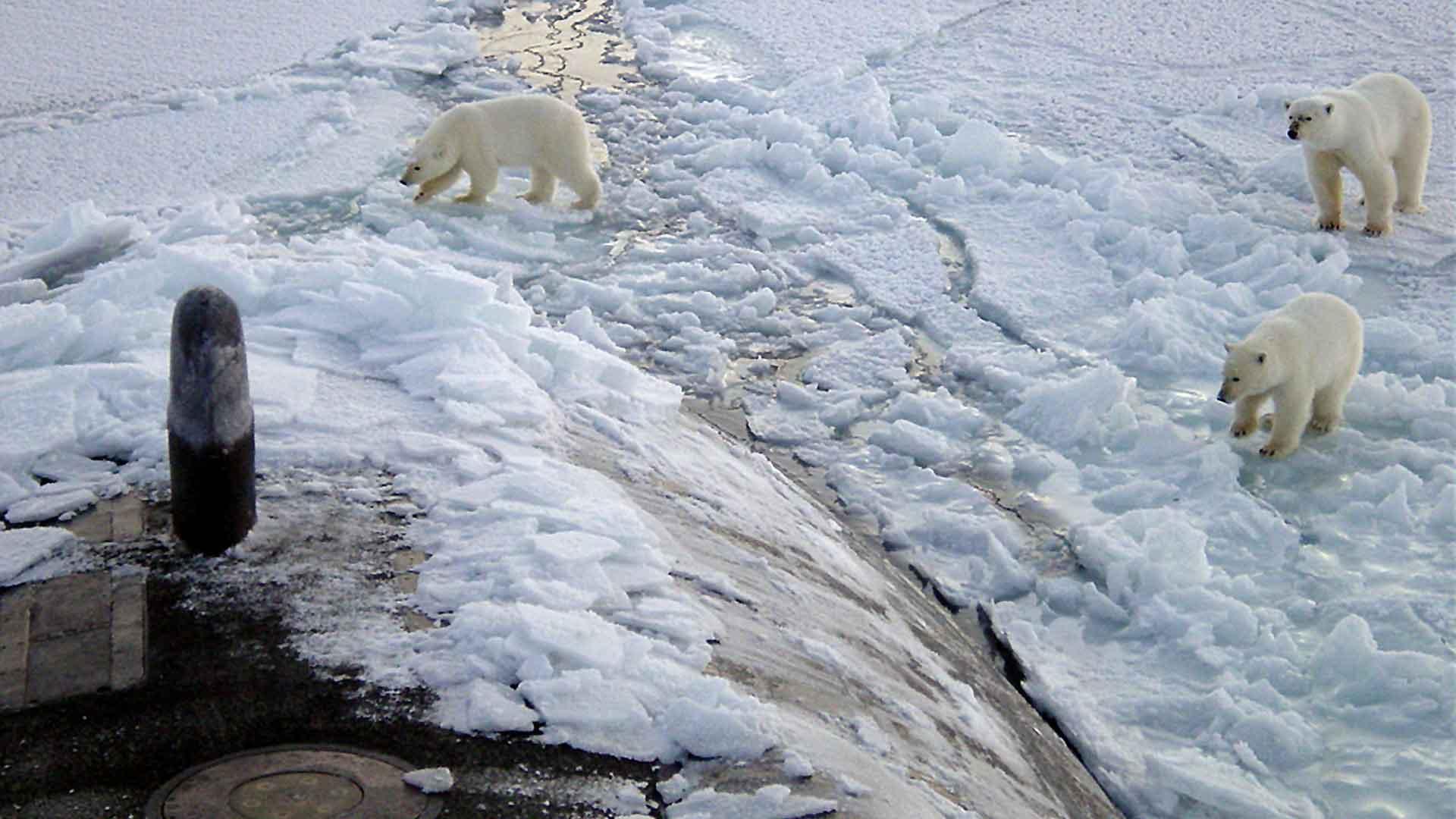 Parvati Foundation, Arctic Free, MAPS, The Marine Arctic Peace Sanctuary, northern sea route, Arctic Sea ice extent